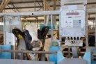 Optimaliseren voeropname melkvee voor fokkerij