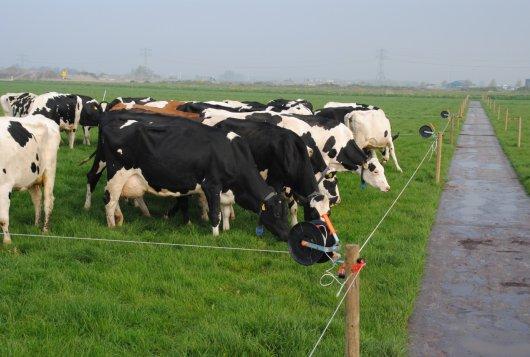 Volop beweidingsproeven op Dairy Campus