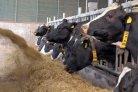 Verhoging veestapelbenutting leidt tot besparing op voeraankoop en mestafzet
