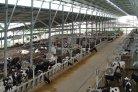 EU Zuivellanden hebben minder koeien per bedrijf dan buiten Europa