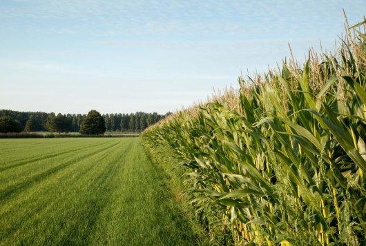 Benut de bodem voor meer voer van eigen land