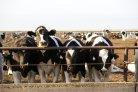 Kostprijs melk in 2015 gedaald