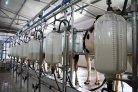Hoge productiviteit voor Nederlandse melkveehouders