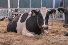 Veehouders gezocht voor testen droogstansapp