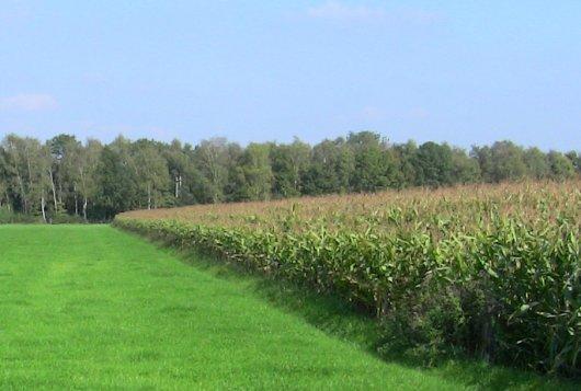Nieuwe meetsystemen voor gras