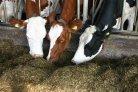 Fokwaarde voeropname bekend voor alle stieren