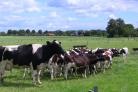 Webinar (Weide)gras levert meer op dan melk